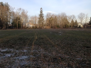 Our hayfield, awaiting construction.
