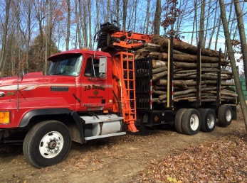 Logs from trees cut for the leaching field, truck 1 of 2. Logs sold to be cut into firewood.